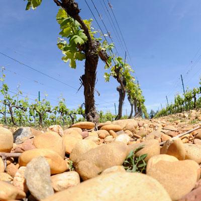"""""""De l'eau dans son vin"""" @ Mourgues du gres, Beaucaire"""